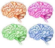 Human brains Stock Images