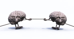 Human brains and war rope Royalty Free Stock Images