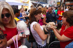 Human & Canines Mingle. Human & Canine attendees mingle at Broadway Barks Rescue & Adoption Fair in Shubert Alley Stock Photo