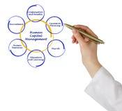 Human Capital Management Royalty Free Stock Image