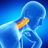 The human cervical spine Royalty Free Stock Images