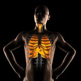 Human chest radiography scan Stock Images