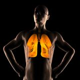 Human chest radiography scan Stock Photos