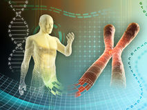Human chromosome. Male figure created by some human chromosome. Digital illustration Stock Images