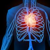 Human circulatory system Stock Photo
