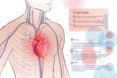 Human circulatory vascular system. 3d illustration of the human circulatory vascular system template. anatomical heart. man body parts. Hand drown vector sketch Royalty Free Stock Image