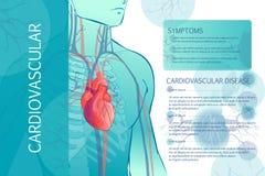 Human circulatory vascular system. 3d illustration of the human circulatory vascular system template. anatomical heart. man body parts. Hand drown vector sketch Stock Photos
