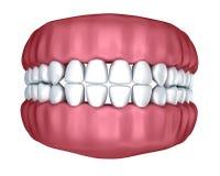 Human denture 3D image Stock Photography