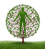 Human Development. And growth of personality and character in development as a medical icon of health as a tree with branches and green leaves in the shape of a Stock Photo