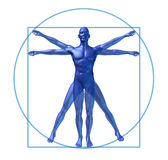 Human diagram vitruvian man isolated