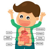 Human digestion system stock illustration