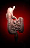 Human digestive system Royalty Free Stock Photos