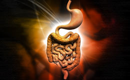Human digestive system Royalty Free Stock Images