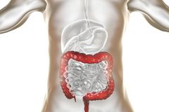 Human digestive system anatomy with highlighted large intestine. 3D illustration royalty free illustration