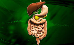 Human digestive system. Digital illustration of human digestive system in coloured background royalty free stock photo