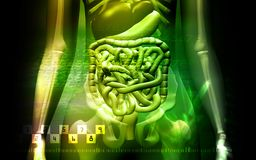 Human digestive system and Skelton Royalty Free Stock Images