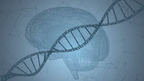 Human DNA, the brain. Abstract background with plexus. Loop animation royalty free illustration