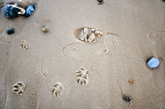Human and dog prints on the beach Stock Photos