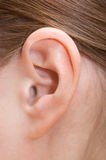 Human ear. Close up of a human ear Stock Image