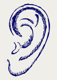 Human ear. Doodle style. Vector Royalty Free Stock Image