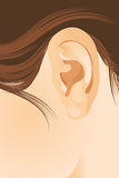Human ear. The human ear. Vector illustration Stock Image