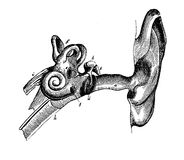 Human ear anatomy, vintage engraving Stock Images