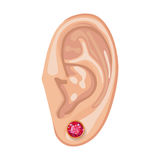 Human ear & earring. Human ear with framed earring front view, vector illustration isolated on white background Stock Images