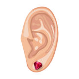 Human ear & earring. Human ear with an hanging earring front view, vector illustration isolated on white background Stock Images