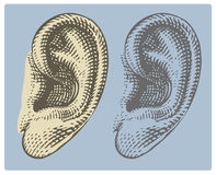 Human ear in engraved style stock images