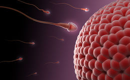Human egg insemination Royalty Free Stock Image