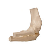 Human elbow Stock Image