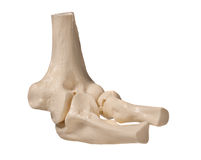 Human elbow Stock Photos