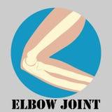 Human elbow joint vector illustration