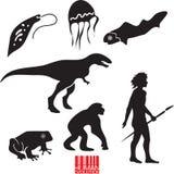 Human evolution. Animal evolution vector set vector illustration
