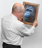 Human evolution. Funny man and mirror with his monkey face. Human evolution and Darwin theory concept Stock Photography