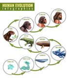 Human Evolution Infographics. With development stages from single cell to sapiens on white background vector illustration royalty free illustration