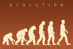 Human evolution species Royalty Free Stock Photo
