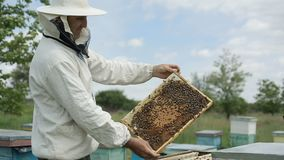 Human examine a hive of bees stock video footage