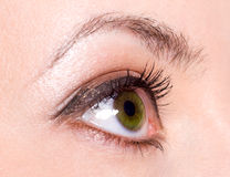 Human eye. Beautiful green Human female eye royalty free stock photos
