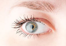 Human eye. Human grey eye. macro shooting Royalty Free Stock Images