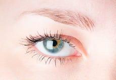 Human eye. Stock Photo
