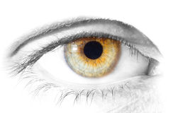 Human Eye. Close up view of a human eye - colorkey - isolated on white Royalty Free Stock Photography