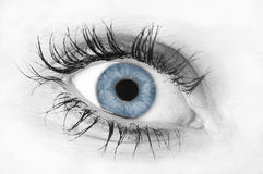 Human eye. Black and white isolated human eye with colored iris stock photography