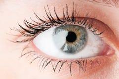 Human eye. Stock Photos