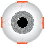 The human eye Stock Photo