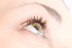 Human eye. Beauty, bloodshot, brows royalty free stock images