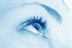 Human eye. / bloodshot, brows, care royalty free stock images