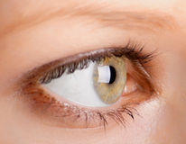 Human eye. Close-up. Shallow DOF Stock Photos