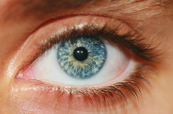 Human Eye. Up Close Macro View Royalty Free Stock Images