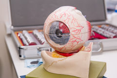 Human eye anatomy model on the background of set of corrective lens. Abstract background to ophthalmology concept. Selective focus. Space for text stock images